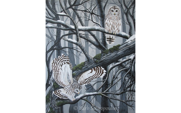 Barred Owls_Barb Sotiropoulos
