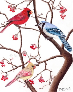 """Birds of a Feather"" 11×14 in, Colored Pencil on Fabriano Artistico Hot Press Watercolor Paper 2016. Original photo reference Sally Robertson. Copyright released.