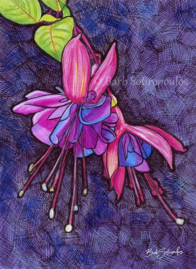 """""""Fuchsias"""",4.5 ×6.25 in, Colored Pencil, Watercolor and Ink on Strathmore Mixed Media Paper 2015. All images copyright Barb Sotiropoulos. All Rights Reserved.(Prints Available)"""