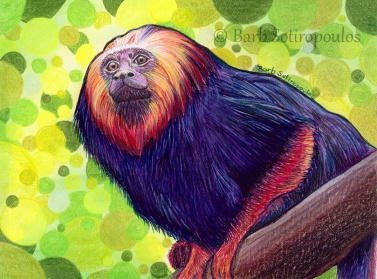 """Lion Tamarin"" 6.25 ×4.5 in, Colored Pencil, Watercolor and Acrylic Paint on Strathmore Mixed Media Paper 2015. All images copyright Barb Sotiropoulos. All Rights Reserved."