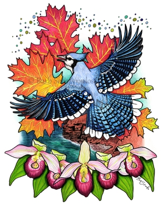 """""""The Small Under the Protection of the Great"""" 11×14 in Colored Pencil, Ink and PITT Pens on Hotpress Watercolor Paper 2017. All images copyright Barb Sotiropoulos. All Rights Reserved. This illustration is 8 of 14 in the Canada 150 series. It is inspired by the provincial symbols of the Province of Prince Edward Island and includes the Blue Jay, Red Oak Tree, and Lady Slipper."""