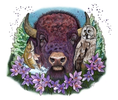"""Glorious & Free"" 14×11 in Colored Pencil, Acrylic Ink and PITT Pens on Hot Press Watercolor Paper 2017. All images copyright Barb Sotiropoulos. All Rights Reserved. This illustration is 3 of 14 in the Canada 150 series. It is inspired by the provincial symbols of the Province of Manitoba and includes the Plains Bison, Great Grey Owl, Prairie Crocus, Walleye Fish, and White Spruce Tree."